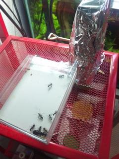 蟻マシーン2号ミニ 引っ越し