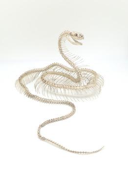 自在置物 蛇骨格